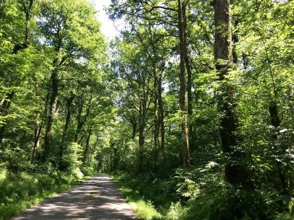 salies de Béarn, sous bois, campagne, vacances vertes