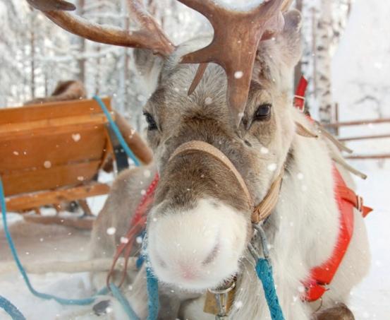 conte de Noel, sud ouest, salies de bearn , rennes du père noel , rudolphe au nez rouge, chariot du père noel ,
