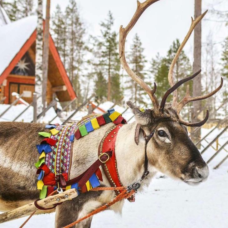 conte de noel du sud ouest, les rennes du père noel, rudolphe au nez rouge, comete et eclair les rennes de noel, merry christmas,